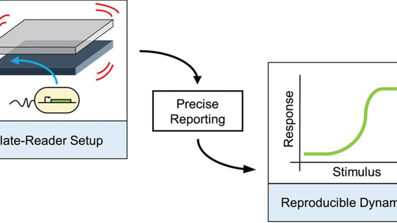 Reproducibility of High-Throughput Plate-Reader Experiments in Synthetic Biology